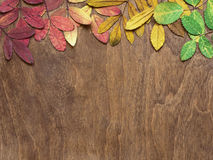 Autumn leaves on brown wooden background. Yellow, red and green leaves on brown wooden background Royalty Free Stock Images
