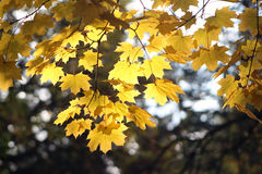 Autumn leaves. On a brunch Stock Image
