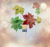 Autumn leaves and brush Stock Photography
