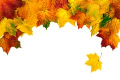 Autumn leaves building a bow-shaped border Stock Images