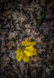 Autumn Leaves. Bunch of fallen leaves in the autumn Stock Image