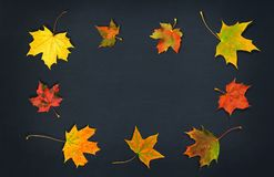 Autumn Leaves Bunte Ahornblätter des Falles auf dunklem Hintergrund Beschneidungspfad eingeschlossen Stockfoto