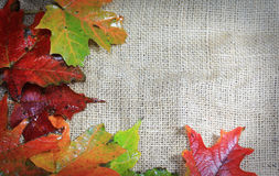 Autumn Leaves on Burlap Royalty Free Stock Images
