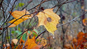 Autumn leaves and bushes closeup stock video footage