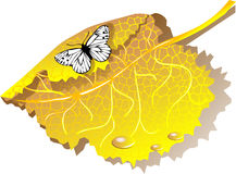 Autumn leaves and butterfly Royalty Free Stock Photos
