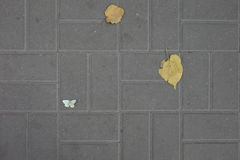 Autumn leaves and a butterfly on the sidewalk tile Stock Photo