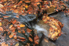 Autumn Leaves caido en arroyo de la montaña Imagen de archivo libre de regalías
