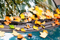 Autumn leaves on car hood Stock Photo