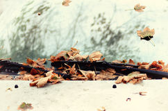 Autumn leaves on the car Royalty Free Stock Photography