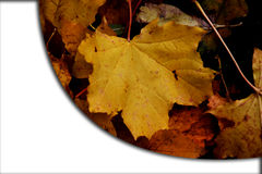 Autumn leaves card banner with white empty space photo. Stock Image