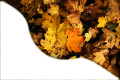 Autumn leaves card banner with white empty space photo. Stock Photography