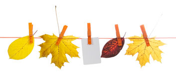Autumn leaves and card on a rope Royalty Free Stock Photo