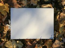 Autumn leaves and cardboard Royalty Free Stock Photos