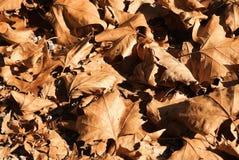 The autumn leaves  carpet Stock Image