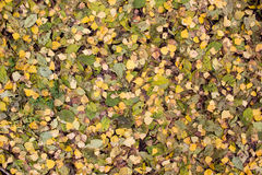 Autumn leaves carpet Stock Photography