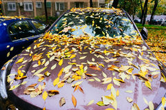 Autumn leaves on cars Royalty Free Stock Photos