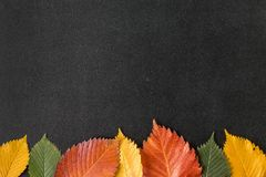 Autumn leaves on a chalkboard Stock Photography