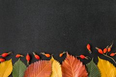 Autumn leaves on a chalkboard Stock Images