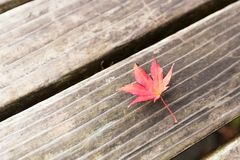 Autumn leaves change color Into the winter Royalty Free Stock Image