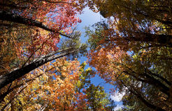 Autumn Leaves Change Colors in Fourth of July Canyon in New Mexico Stock Photo