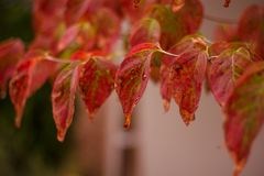 Autumn - leaves changing color Stock Images