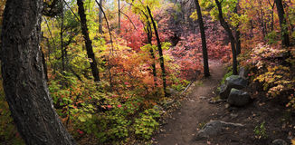 Autumn Leaves Changing in Fourth of July Canyon in New Mexico Royalty Free Stock Photo