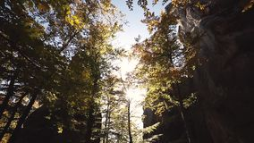 Autumn Leaves che oscilla su un albero in parco autunnale video d archivio