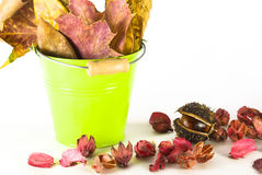 Autumn leaves and chestnut. Variety of autumn leaves and chestnut arranged in a small bucket and isolated on white background Stock Images