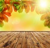 Autumn leaves of chestnut tree Stock Image