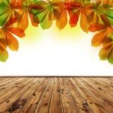 Autumn leaves of chestnut tree Stock Photos