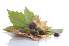 Autumn leaves and chestnuts Stock Images