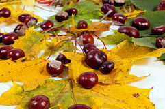 Autumn leaves and chestnuts Stock Photos