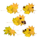 Autumn leaves and chestnuts Royalty Free Stock Images