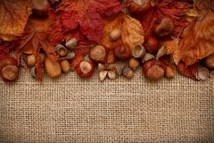 Autumn Leaves Chestnuts and Acorns over jute background