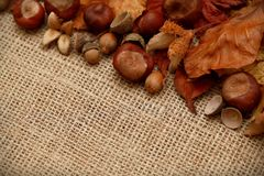 Autumn Leaves Chestnuts and Acorns over jute background Stock Images