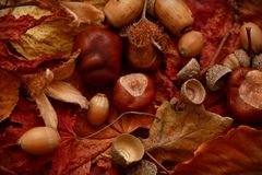 Autumn Leaves Chestnuts and Acorns over jute background Royalty Free Stock Photos