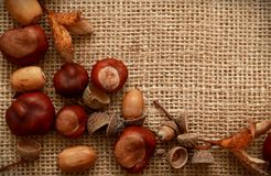 Autumn Leaves Chestnuts and Acorns over jute background Stock Photography