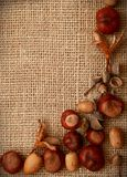 Autumn Leaves Chestnuts and Acorns over jute background Stock Photo