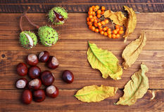 Autumn leaves, chestnuts and rowanberry on wooden background. Royalty Free Stock Photography