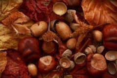 Autumn Leaves Chestnuts y bellotas sobre fondo del yute Fotografía de archivo