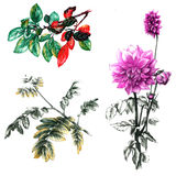 Autumn leaves and chrysanthemum flower Stock Images