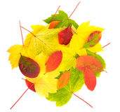 Autumn leaves in circle Stock Photos