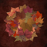 Autumn leaves in circle pattern Royalty Free Stock Photos