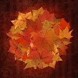 Autumn leaves circle pattern Royalty Free Stock Images