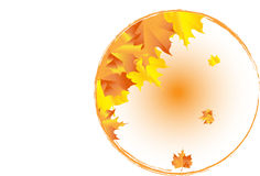 Autumn leaves. In a circular background Stock Photography