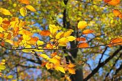 Autumn trees. Autumn leaves in city garden stock photos