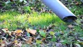 Autumn leaves cleaning with vacuum cleaner. In the garden stock video footage