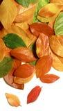 Autumn leaves close-up stock photo