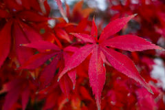 Free Autumn Leaves Close-up Stock Photos - 75451853