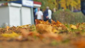 Autumn leaves close-up. In the background, people walk in the autumn park. The crowd of unknown lyudy blurred out of. Autumn leaves close-up shot people walk in stock video